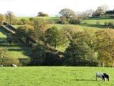 Cross Farm