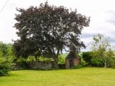 Scrag Oak
