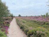 Retreat 27762 – Saxmundham, East of England